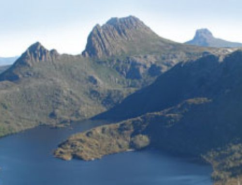 Come see Tassie Devils with Cradle Coast Tours